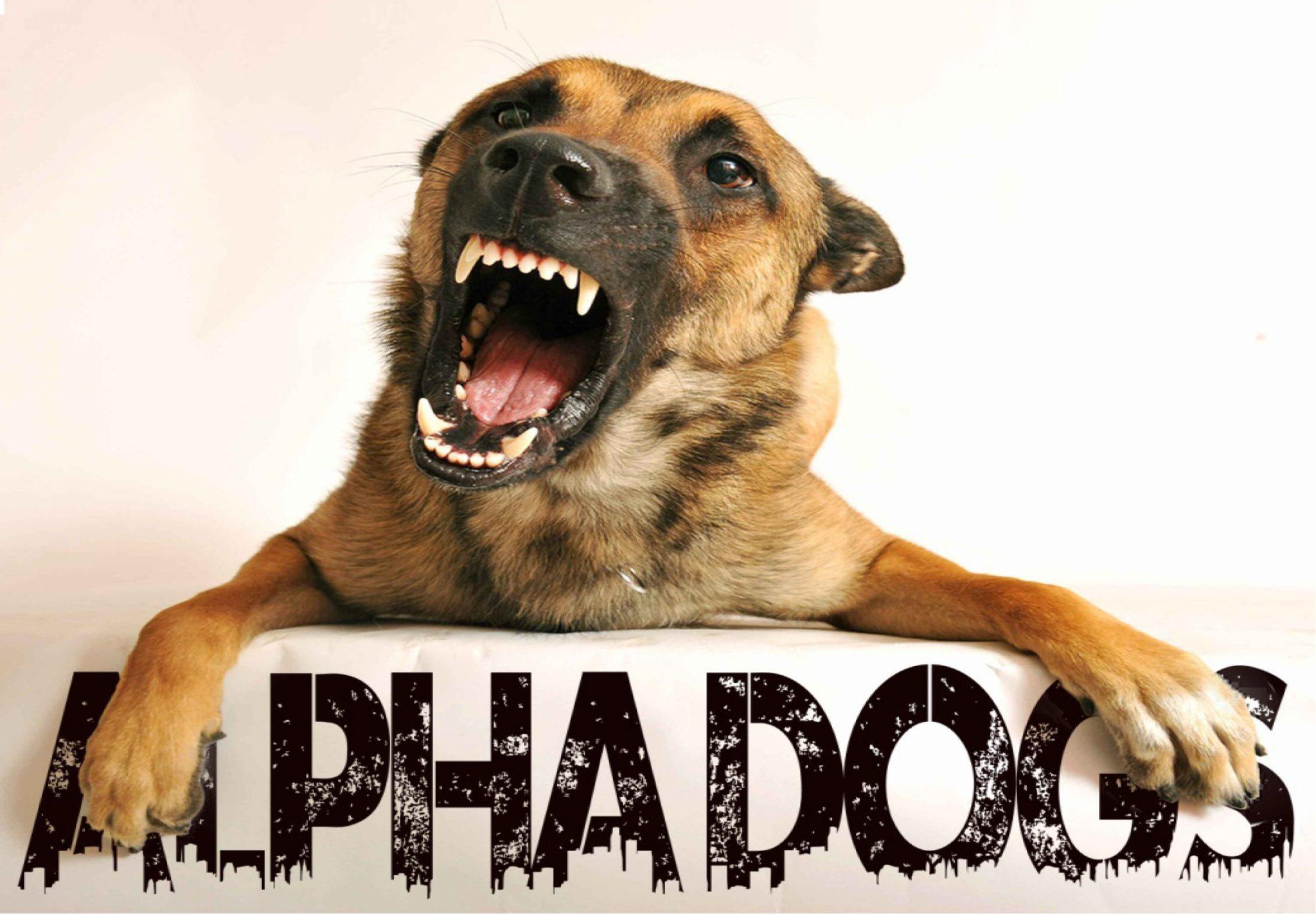 Alpha Dogs, una banda de buen Hard Rock y trabajo duro